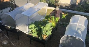 Wicking bed to grow nutritious vegetables fast